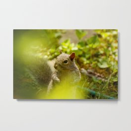 Squirrel! Metal Print