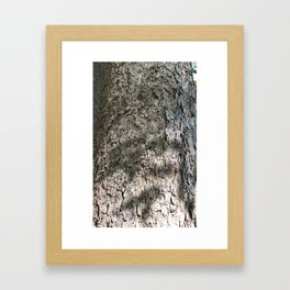 Sycamore Tree Bark Framed Art Print