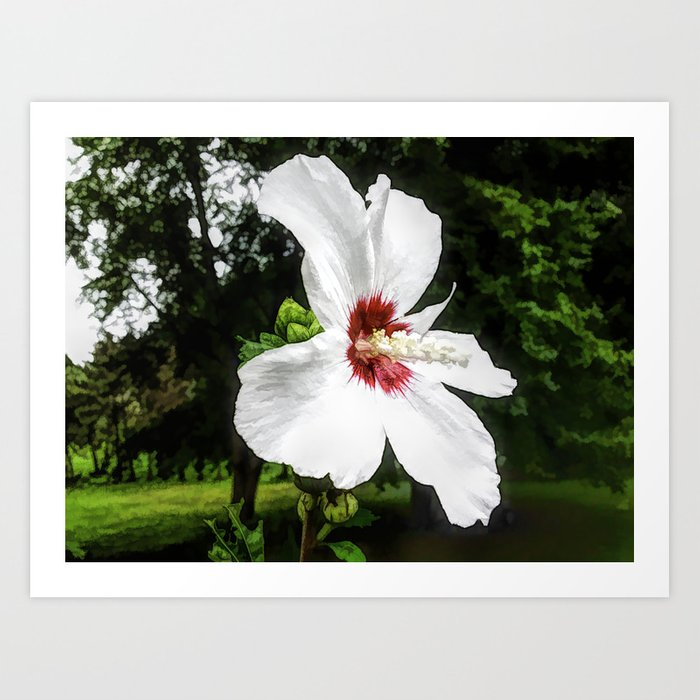 The White Hibiscus Flower Art Print By Goldenviews Society6