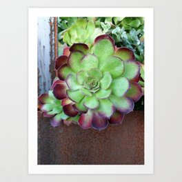 The Rusty Succulent Art Print