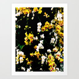 Orchid Celebration Art Print