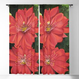 Cactus red flower blooming in Spring Blackout Curtain