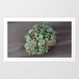 Master Kush Medical Marijuana Art Print