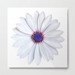 daisy daisy Metal Print