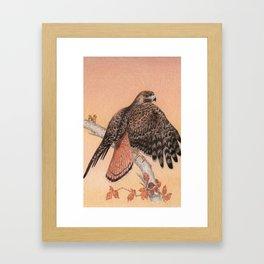 Red-tailed hawk Framed Art Print