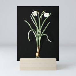 Vintage Narcissus Candidissimus Botanical Illustration on Black (Portrait) Mini Art Print