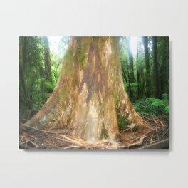 "Mountain Ash Tree (Aka ""The Big Boy"") Metal Print"