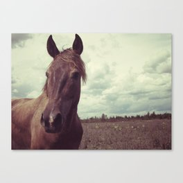 Portrait of a Horse Canvas Print