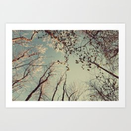 Spring trees in forest Art Print
