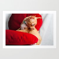 chihuahua Art Prints featuring Chihuahua by Luca Spanu