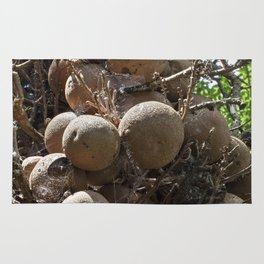Cannonball Tree Fruit Rug