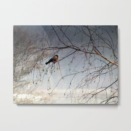 bullfinch, gil Metal Print