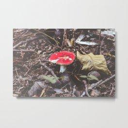 Red Woodland Mushroom Fungi Photography Metal Print