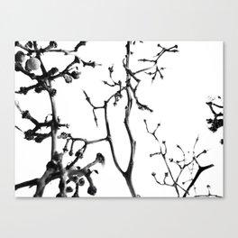 Strange Trees 2 Canvas Print