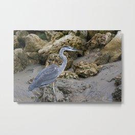Great Blue Heron at the Beach Metal Print