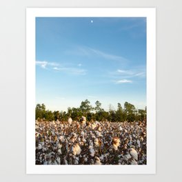 Cotton Field 16 Art Print