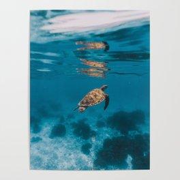 Turtle iii Poster