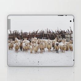 Snowy Sheep Stare Laptop & iPad Skin