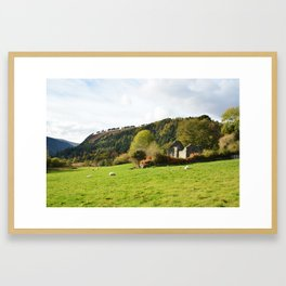 Field of Sheep Ireland Framed Art Print