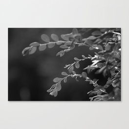 A Random Ass Plant In Black And White Canvas Print
