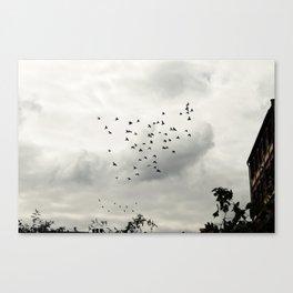 Birds in Bristol Canvas Print