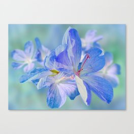 FLOWERS - Geranium endressii Canvas Print
