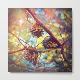 Autumn pine cones  #photography Metal Print