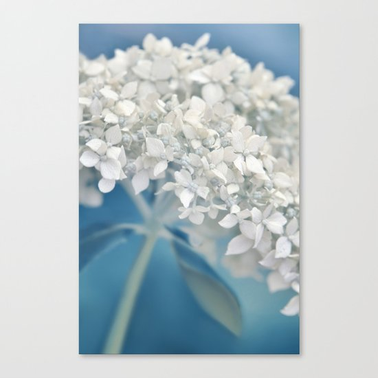 Beautiful White Hydrangea 276 Canvas Print