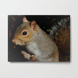 Scrappy squirrel Metal Print