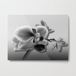Orchid in Black and White A537 Metal Print