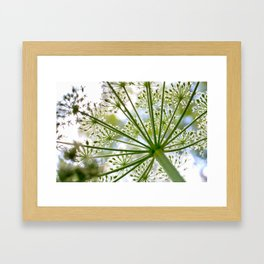 Delicate cow parsley Framed Art Print