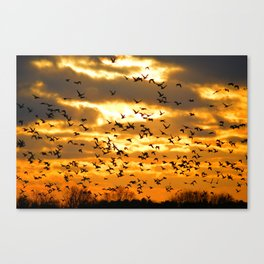 Ducks Unlimited Canvas Print