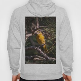 Morning Oriole Hoody