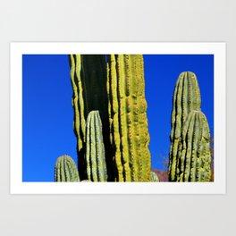 Colorful Cactus & Blue Sky Art Print