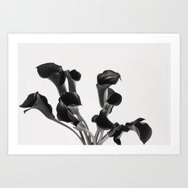 Black and White Cala Lily Study Art Print