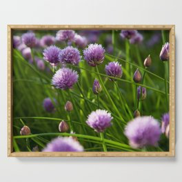 beautiful chive flowers in evening light Serving Tray