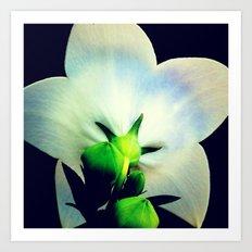FLOWER 043 Art Print