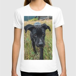 Doggy in the Field // Natural Filter Hiking by Rustic Abandoned Log Cabin Summit Colorado T-shirt