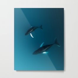 Mother and Child – Humpback Whales in the Ocean – Minimalist Wildlife Photography Metal Print