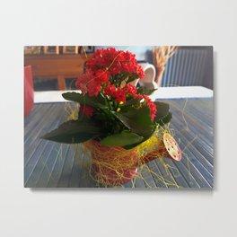 Apulian flower (3) Metal Print
