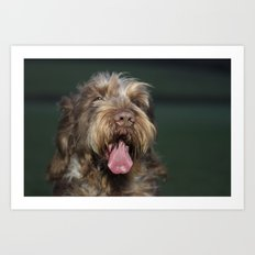 Brown Roan Italian Spinone Dog Head Shot Art Print