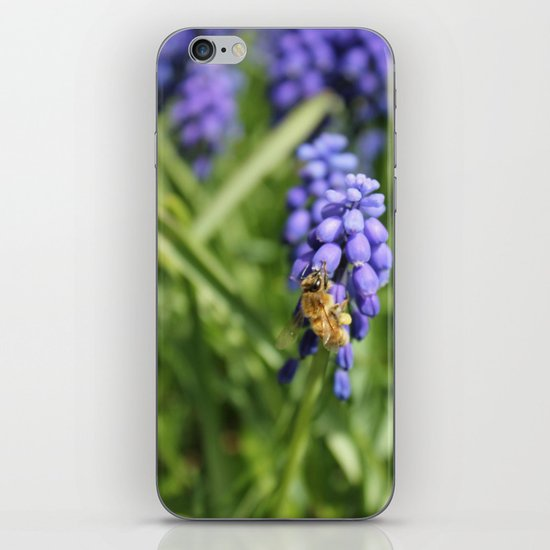 Sweet Hyacinth iPhone & iPod Skin