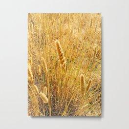 Sun Kissed Wheat Grass Metal Print