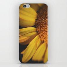 Sunflow Daze iPhone & iPod Skin