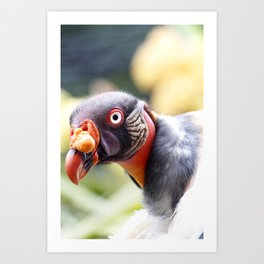 King Vulture Art Print