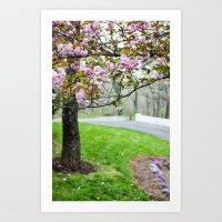 cherry tree 1 Art Print