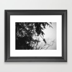 Quiet Rain Framed Art Print