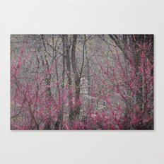 Color shy Canvas Print