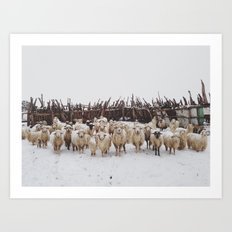 Snowy Sheep Stare Art Print