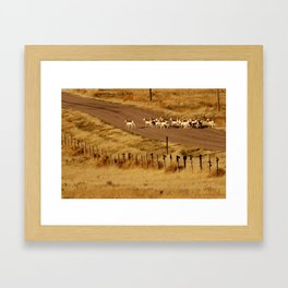 Why did the antelope cross the road? Framed Art Print